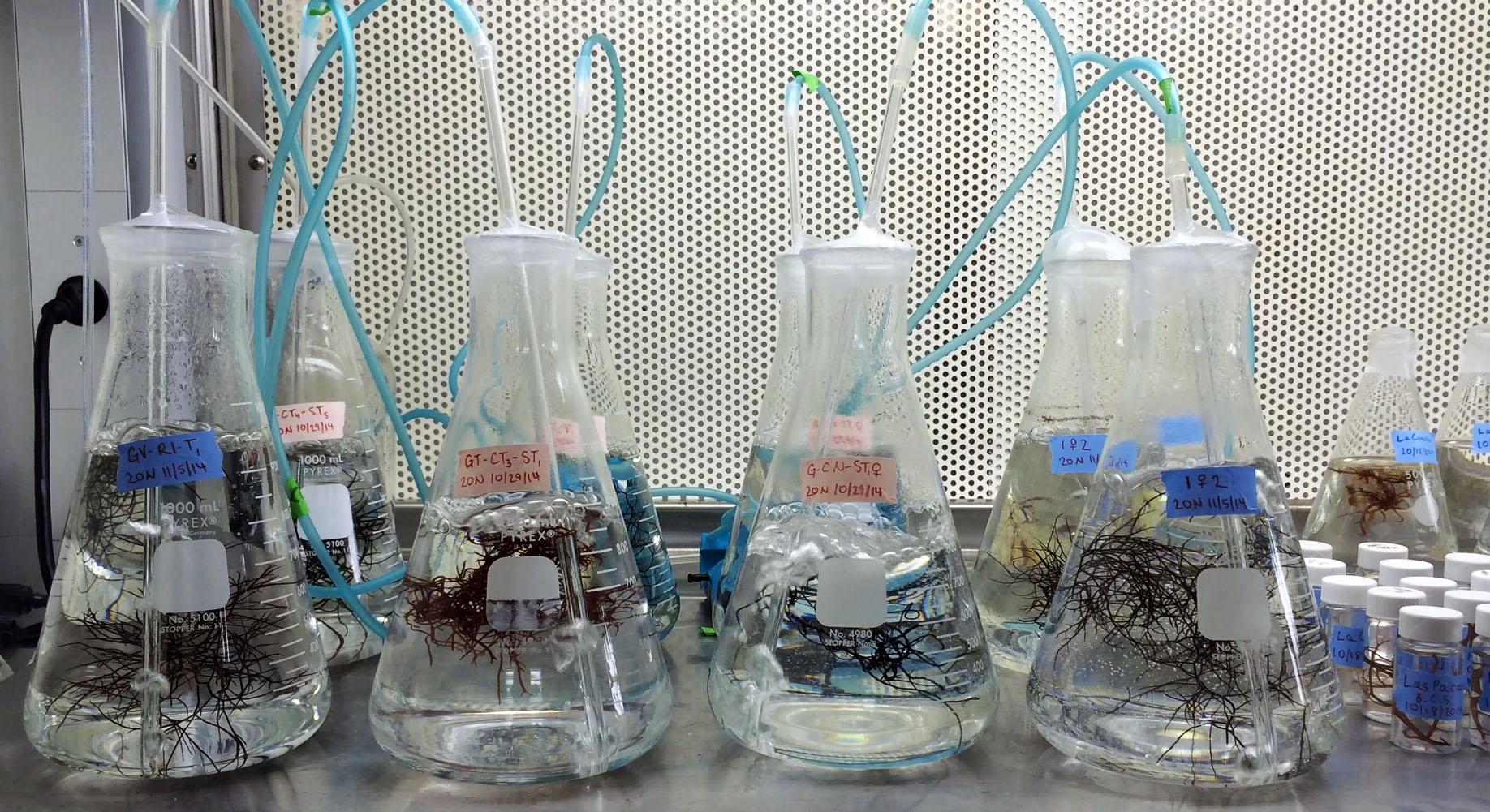 Seaweed Nursery
