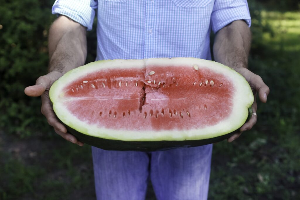 A man in a blue shirt and blue jeans holds up a large, oblong half of a watermelon, with bright pink flesh and small seeds.