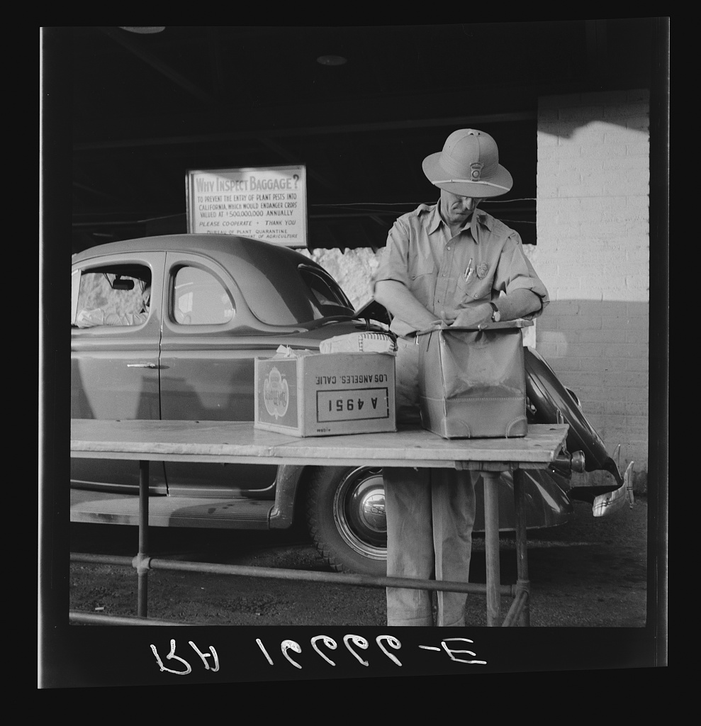 Black and white photo of a man in a pith helmet reaching into a paper bag to inspect its contents. Next to him on the folding table is a cardboard box and behind him is an old-fashioned car.