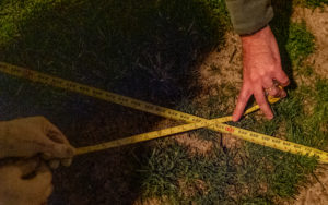 Two pairs of hands, one pale and the other encased in white work gloves, hold two yellow measuring tapes criss-crossed over grassy ground.